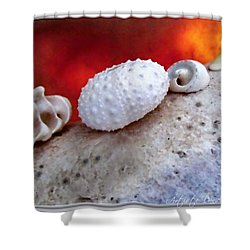 White Seashells And Purple Conch  Shower Curtain by Danielle  Parent
