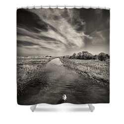 White Swan Shower Curtain by Dave Bowman