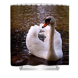 White Swan Shower Curtain by Rona Black