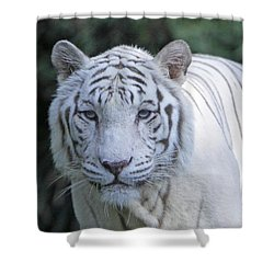 White Tiger Face Shower Curtain by Shoal Hollingsworth