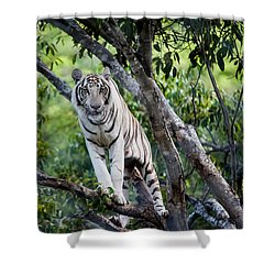 White Tiger On The Tree Shower Curtain by Jenny Rainbow