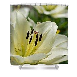 White Velvet - Featured 3 Shower Curtain by Alexander Senin