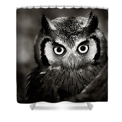 Whitefaced Owl Shower Curtain by Johan Swanepoel