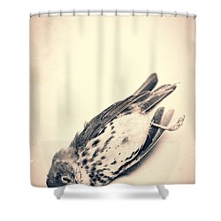 Who Killed Cock Robin Shower Curtain by Edward Fielding