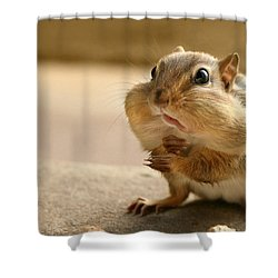 Who Me Shower Curtain by Lori Deiter
