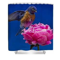Whoaa Shower Curtain by Jean Noren