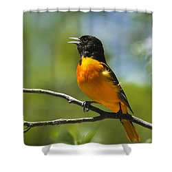 Wild Birds - Baltimore Oriole Shower Curtain by Christina Rollo