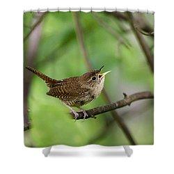 Wild Birds - House Wren Shower Curtain by Christina Rollo