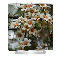 Wild Flowering Beauty Shower Curtain by Kim Pate