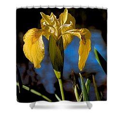 Wild Iris Shower Curtain by Robert Bales
