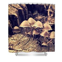 Wild Mushrooms Shower Curtain by Amanda Elwell