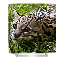 Wild Ocelot Shower Curtain by Heiko Koehrer-Wagner