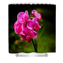 Wild Pea Flower Shower Curtain by Robert Bales