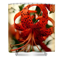 Wild Smokies Lily Shower Curtain by Karen Wiles