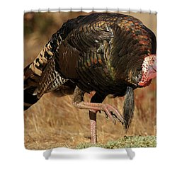 Wild Turkey Shower Curtain by Adam Jewell