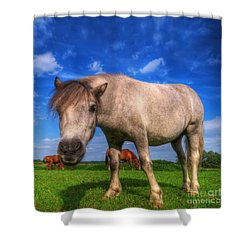 Wild Young Horse On The Field Shower Curtain by Michal Bednarek