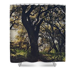 Wildly And Desperately My Arms Reached Out To You Shower Curtain by Laurie Search