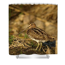 Wilson's Snipe Shower Curtain by James Peterson