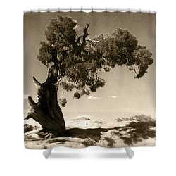 Wind Swept Tree Shower Curtain by Scott Norris