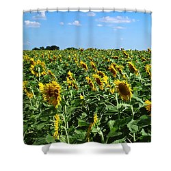 Windblown Sunflowers Shower Curtain by Robert Frederick