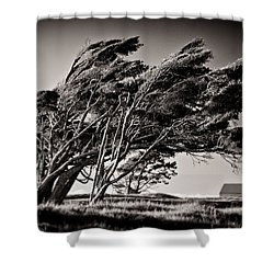 Windswept Shower Curtain by Dave Bowman