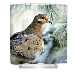 Winter Bird Mourning Dove Shower Curtain by Christina Rollo