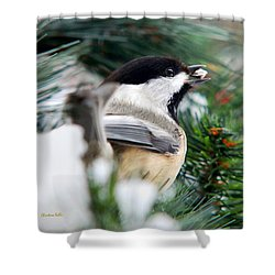 Winter Chickadee With Seed Shower Curtain by Christina Rollo