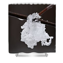 Winter Detail Shower Curtain by Elena Elisseeva