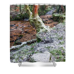 Winter In The Woods Shower Curtain by Adrian Evans