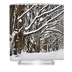 Winter Landscape Shower Curtain by Elena Elisseeva