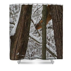 Winter Squirrel Shower Curtain by Dan Sproul