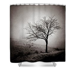 Winter Tree Shower Curtain by Dave Bowman
