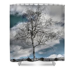 Winter Tree Shower Curtain by Todd Hostetter
