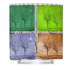 Winter Trees  Shower Curtain by David Dehner
