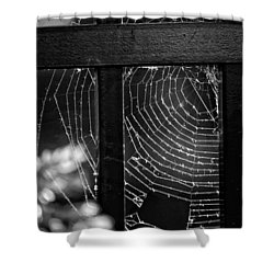 Wonder Web Shower Curtain by Carrie Ann Grippo-Pike