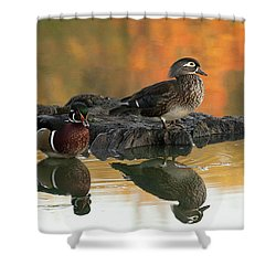 Wood Ducks Shower Curtain by Dale Kincaid