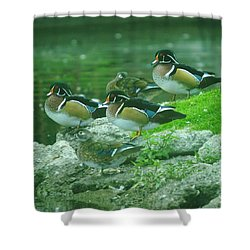 Wood Ducks Hanging Out Shower Curtain by Jeff Swan