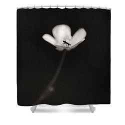 Woodland - Study 1 Shower Curtain by Dave Bowman