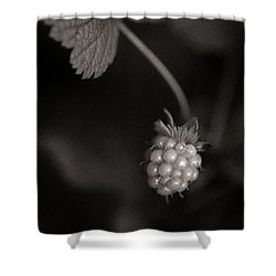 Woodland - Study 10 Shower Curtain by Dave Bowman