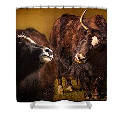 Yak Love Shower Curtain by Priscilla Burgers