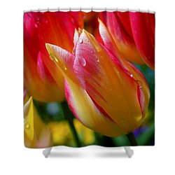 Yellow And Pink Tulips Shower Curtain by Rona Black