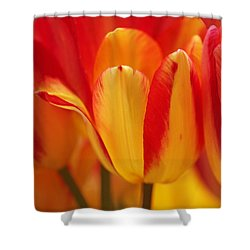 Yellow And Red Striped Tulips Shower Curtain by Rona Black
