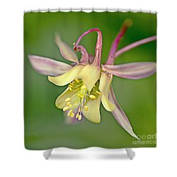Yellow Aquilegia Bloom Shower Curtain by Heiko Koehrer-Wagner