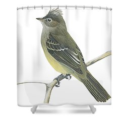 Yellow Bellied Elaenia  Shower Curtain by Anonymous