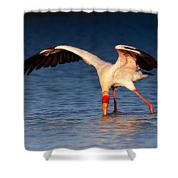 Yellow-billed Stork Hunting For Food Shower Curtain by Johan Swanepoel