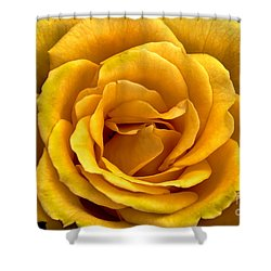 Yellow Close-up Shower Curtain by Robert Bales