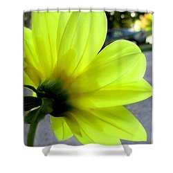 Yellow Dahlia Bloom Shower Curtain by Danielle  Parent