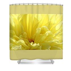 Yellow Dahlia Burst Shower Curtain by Ben and Raisa Gertsberg