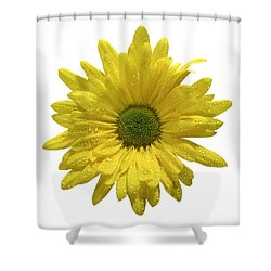 Yellow Daisy  Shower Curtain by Mauro Celotti