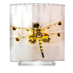 Yellow Dragonfly Pantala Flavescens Shower Curtain by Iris Richardson